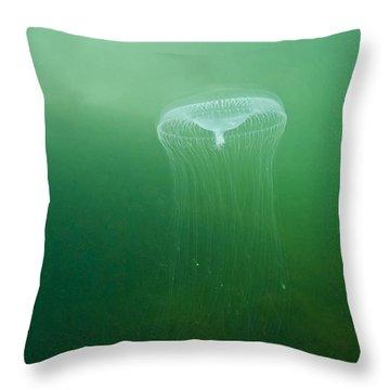 Aequoria Jellyfish Scyphozoa Throw Pillow