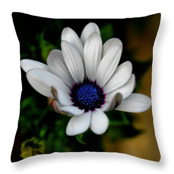 African Daisy Throw Pillow by Lynne Jenkins