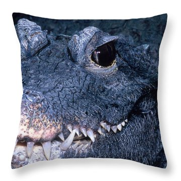 African Dwarf Crocodile Throw Pillow by Dante Fenolio
