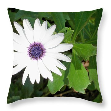 African Moon Flower Throw Pillow by Lisa Phillips