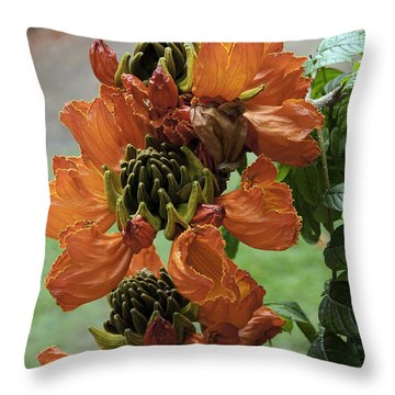 African Tulip Throw Pillow by Paul Plaine