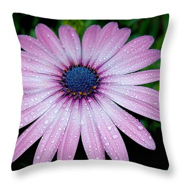 After A Sprinkle Throw Pillow