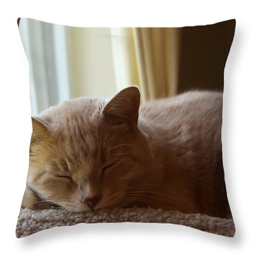 Afternoon Kip Throw Pillow
