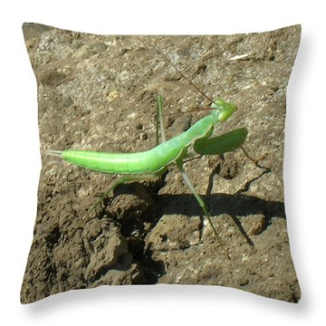 Afternoon Shadow Throw Pillow