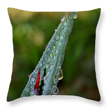 Throw Pillow featuring the photograph Agave Thorn by Werner Lehmann