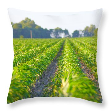 Agriculture- Corn 1 Throw Pillow