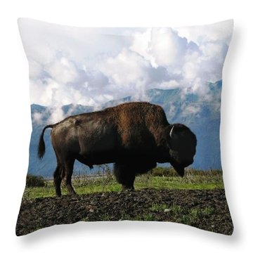 Alaskan Buffalo Throw Pillow by Katie Wing Vigil