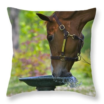 Water Break Throw Pillow