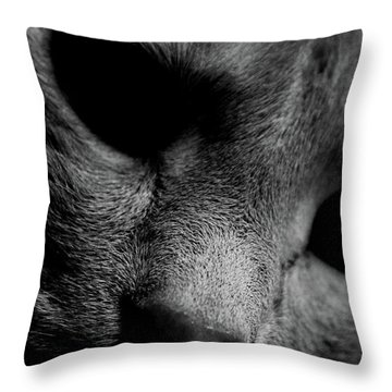 Alfie Two Throw Pillow by Jerry Cordeiro