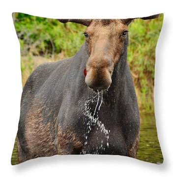 Algonquin Bull Throw Pillow