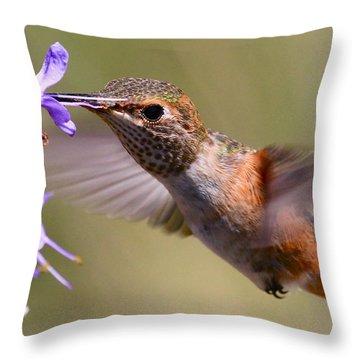 Allen's Hummingbird Throw Pillow by Paul Marto