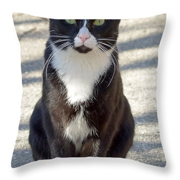 Alley Cat Throw Pillow by Lisa Phillips