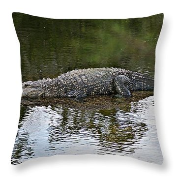 Alligator 1 Throw Pillow by Joe Faherty
