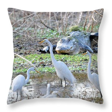 Throw Pillow featuring the photograph Alligator Looking For Food by Dan Friend
