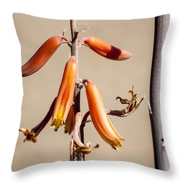Aloe Flower And Stem Throw Pillow by Darcy Michaelchuk