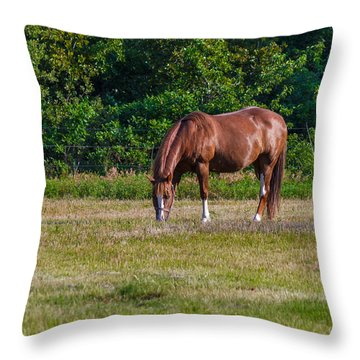 Alone In The Pasture Throw Pillow by Doug Long