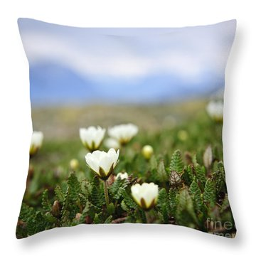 Alpine Meadow In Jasper National Park Throw Pillow by Elena Elisseeva