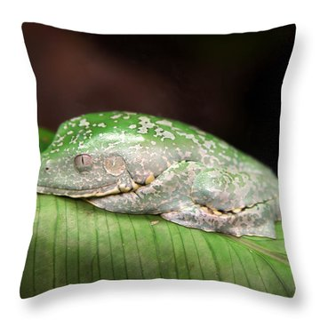 Amazon Leaf Frog Throw Pillow by Brad Granger