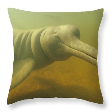 Amazon River Dolphin Portrait Brazil Throw Pillow by Flip Nicklin