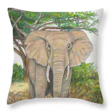Amboseli Elephant Throw Pillow by C L Swanner