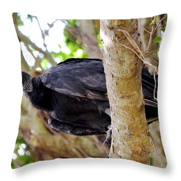 Throw Pillow featuring the photograph Amercan Black Vulture by Pravine Chester