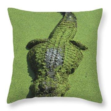 American Alligator Alligator Throw Pillow by Heidi & Hans-Juergen Koch