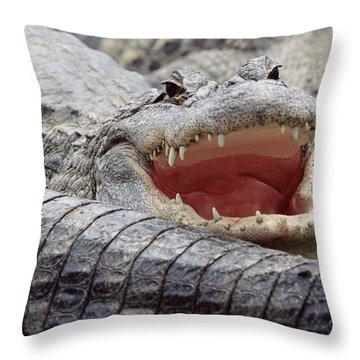 American Alligator Alligator Throw Pillow by Tim Fitzharris