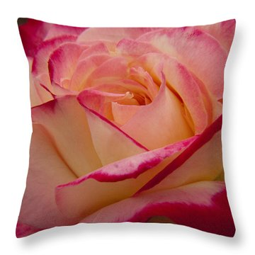 Throw Pillow featuring the photograph American Beauty Rose by Darleen Stry