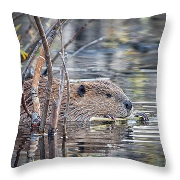 American Beaver Throw Pillow by Ronald Lutz