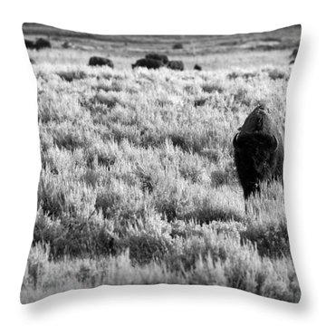 American Bison In Black And White Throw Pillow