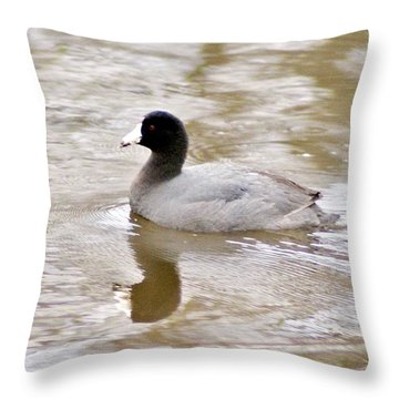American Coot 1 Throw Pillow by Joe Faherty
