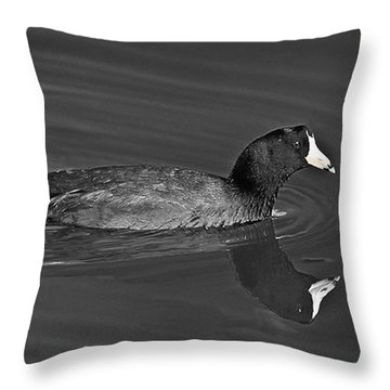 American Coot Throw Pillow by Bob and Nadine Johnston