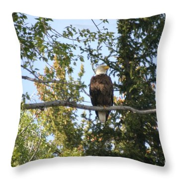 Throw Pillow featuring the photograph American Eagle by Living Color Photography Lorraine Lynch