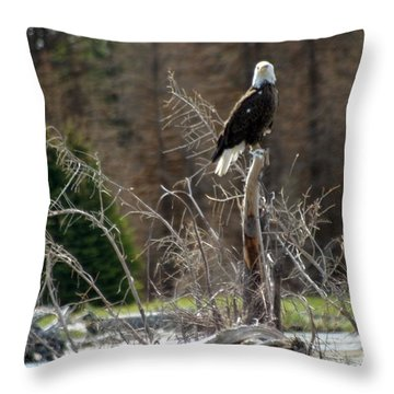 Throw Pillow featuring the photograph American Eagle On Snake River by Living Color Photography Lorraine Lynch