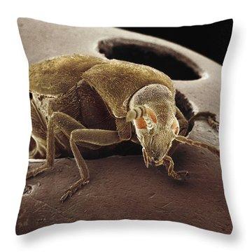 American Seed Beetle Sem Throw Pillow by Albert Lleal