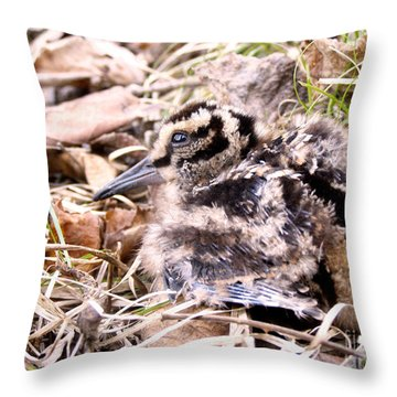 American Woodcock Chick Throw Pillow by Angie Rea