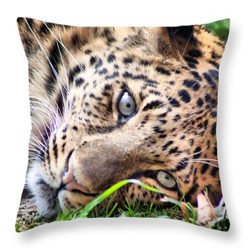 Amur Leopard Throw Pillow by Lynne Jenkins