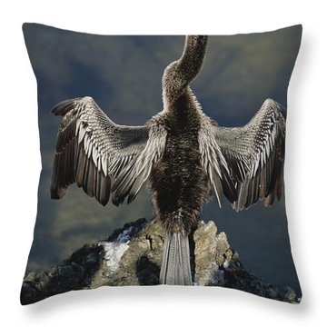 An American Anhinga Dries Its Wings Throw Pillow