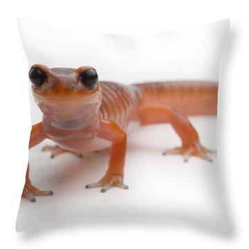 An Ensantina Salamander Throw Pillow