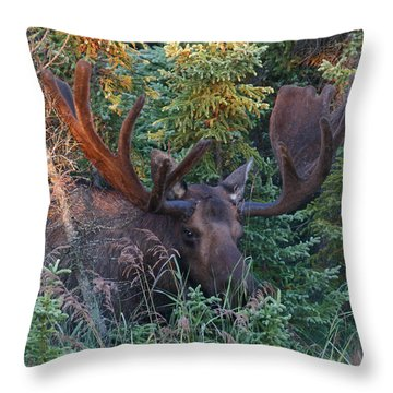 Throw Pillow featuring the photograph An Eye On You by Doug Lloyd