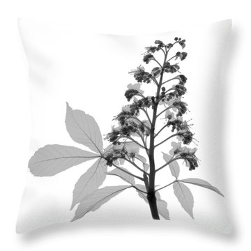 An X-ray Of A Chestnut Tree Flower Throw Pillow by Ted Kinsman
