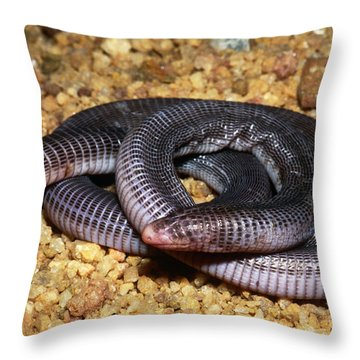 Anamaries Amphisbaenian Throw Pillow by Dante Fenolio