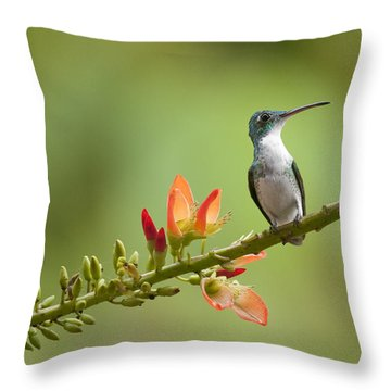 Andean Emerald Amazilia Franciae Throw Pillow by Murray Cooper
