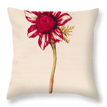 Anemone Throw Pillow by Nicolas Robert