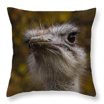 Angry Bird Throw Pillow by Trish Tritz