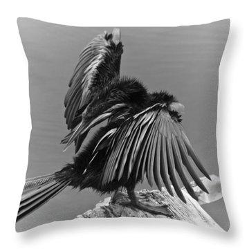 Anhinga Water Bird Throw Pillow by Carolyn Marshall