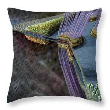 Animal Cell Junctions Throw Pillow by Russell Kightley