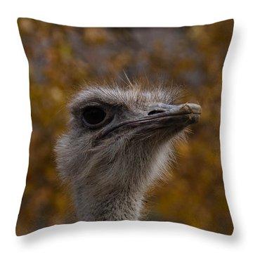 Annoyed Bird Throw Pillow by Trish Tritz