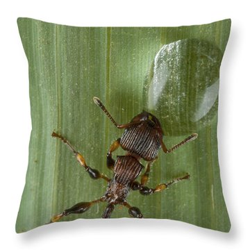 Ant Drinking From Water Droplet Papua Throw Pillow by Piotr Naskrecki