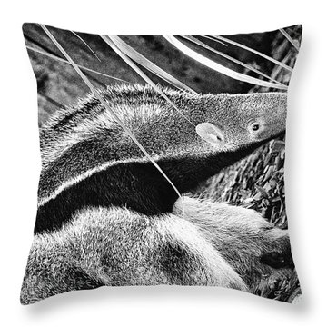 Ant Eater Throw Pillow